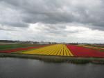 Foto do dia – Campos de tulipa
