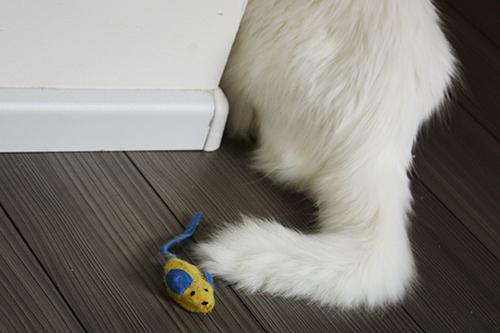 Gato e Rato em Amsterdam