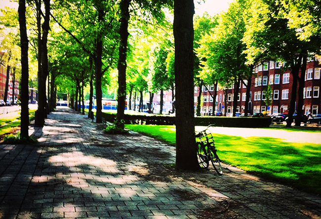 Avenida arborizada em Amsterdam