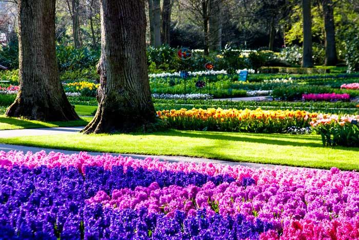 Keukenhof: o parque das flores na Holanda