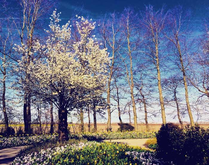 Keukenhof: parque das flores na Holanda