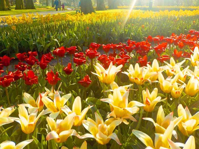 Flores no Keukenhof, Holanda