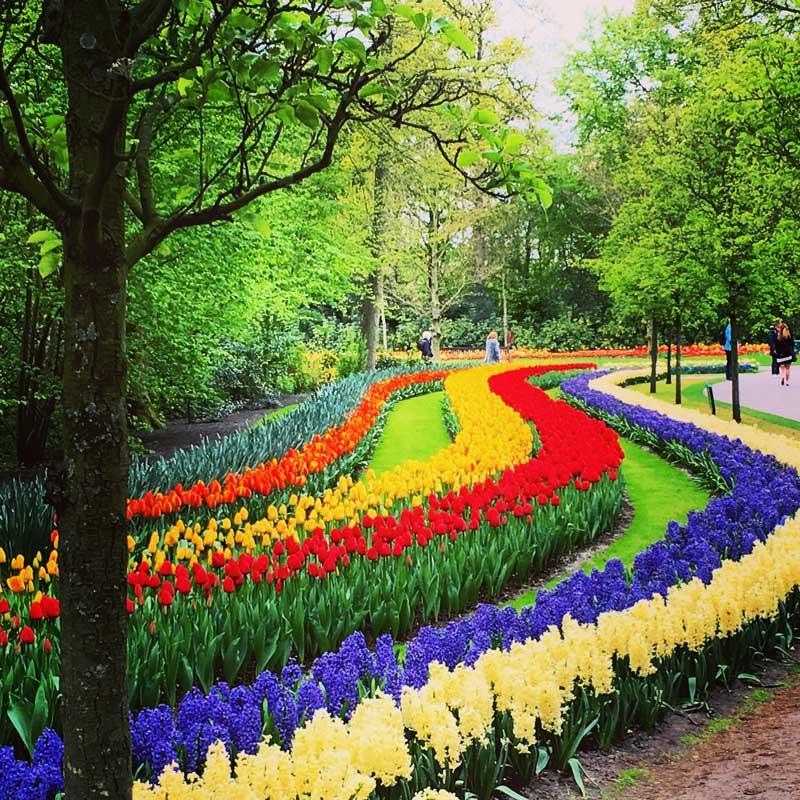 Keukenhof, o parque das tulipas na Holanda
