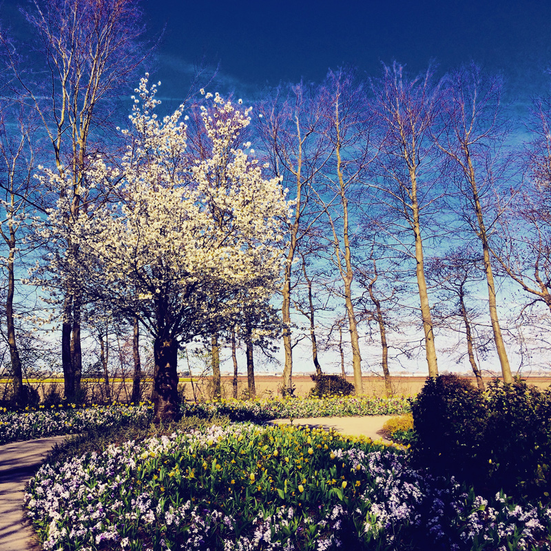 Parque das flores na Holanda: Keukenhof