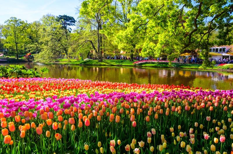 Como visitar o keukenhof, o parque das flores na Holanda