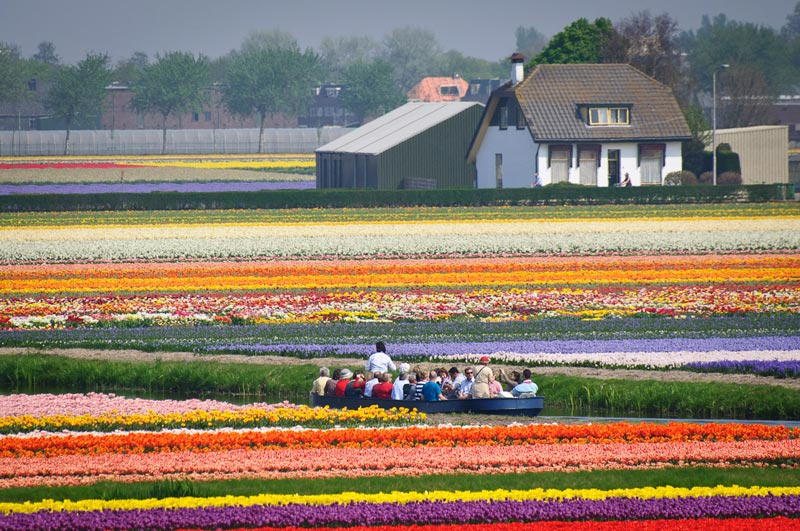 Passeio de barco pelos campos de tulipas perto do Keukenhof