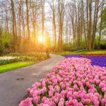 Keukenhof: Como visitar o parque das flores na Holanda (atualizado 2017)