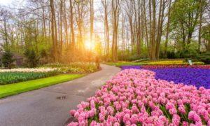 Keukenhof: Como visitar o parque das flores na Holanda (atualizado 2018)