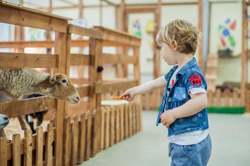 Amsterdam com crianças: fazendinha de bichinhos