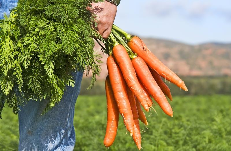 Invenções holandesas: cenouras cor de laranja