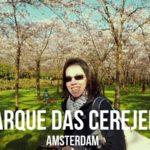 Vamos visitar o parque das cerejeiras em flor em Amsterdam? | Vlog Ducs Amsterdam #009